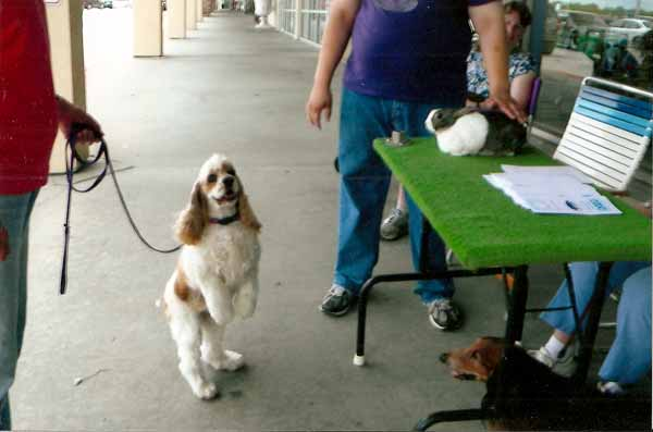 Mona at the meet the breeds June 2010
