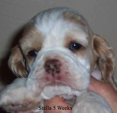 Stella at 5 weeks